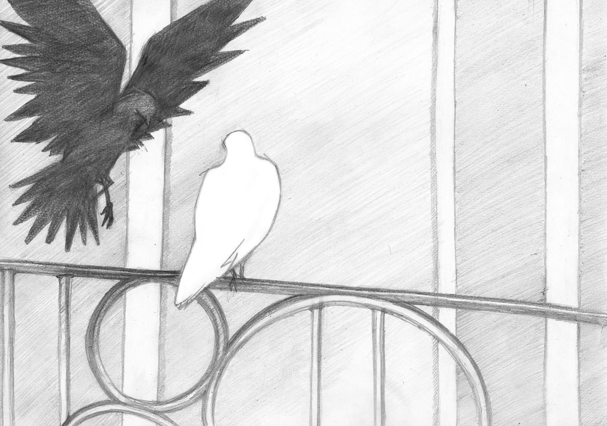 05-colombe-et-vampire-damien-pons