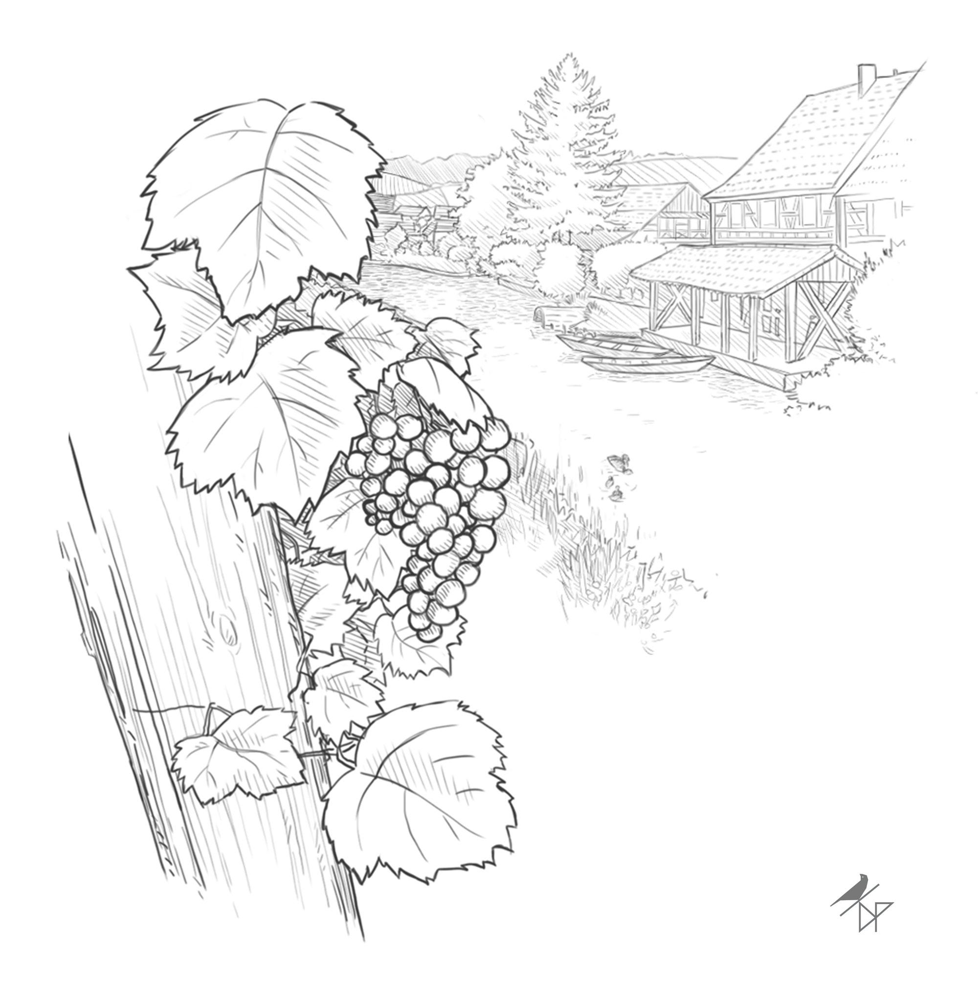 damien pons strasbourg illustrateur vin vignoble oenotoursime
