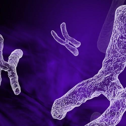 damien, pons, chromosomes, medecine, dna, adn, 3D, strasbourg