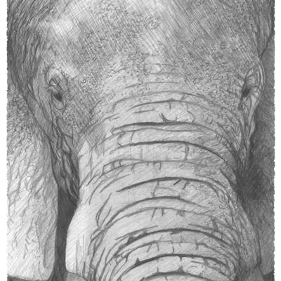Noble animal qu'est l'éléphant, illustration réalisée par Damien Pons artiste strasbourgeois