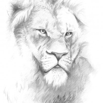 le lion, roi des animaux, portrait dessiné par Damien Pons, illustrateur alsacien installé à Strasbourg