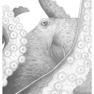 Pieuvre et ses tentacules,, illustration traditionnelle par Damien Pons