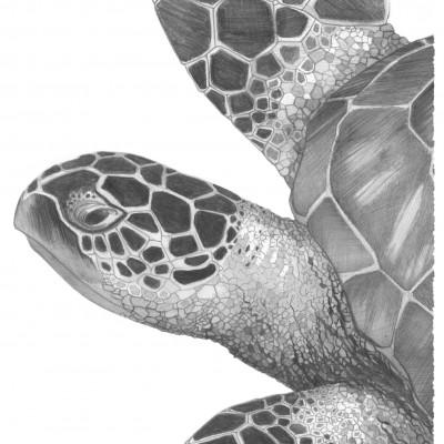 Portrait d'animaux réalisé par Damien Pons : tortue
